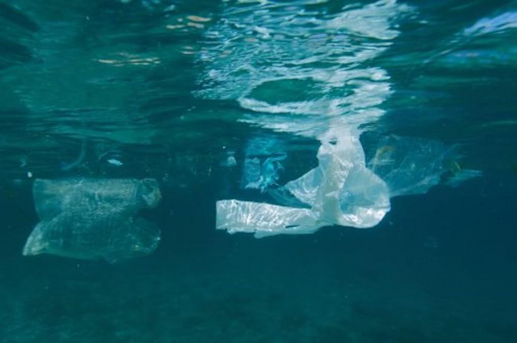 Greenpeace toallitas mar