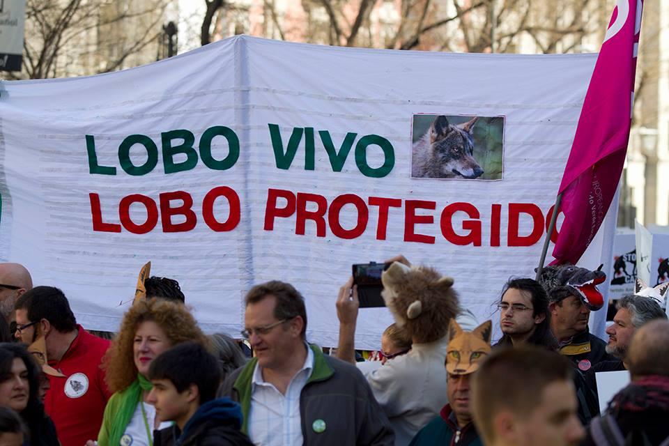 LOBO VIVO LOBO PROTEGIDO MANIFESTACION 15 MARZO 2017