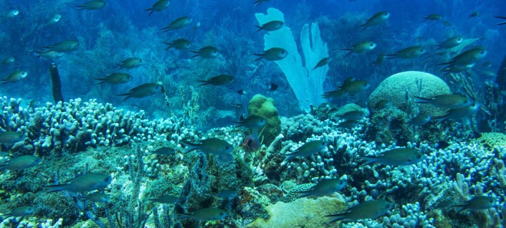 arrecifes coral ONU