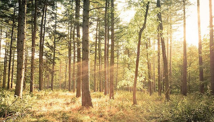 bosque-arbol-sol