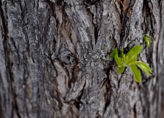 recuperación árbol