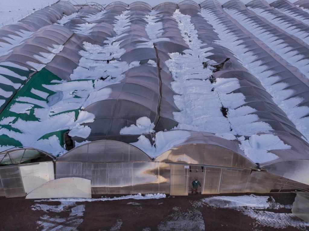 campos cultivo tras Filomena nieve agricultura
