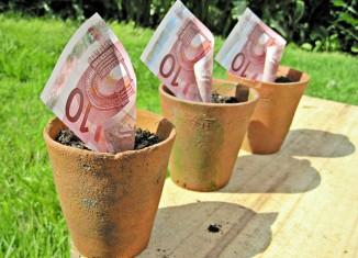 10 euros mejora maceta