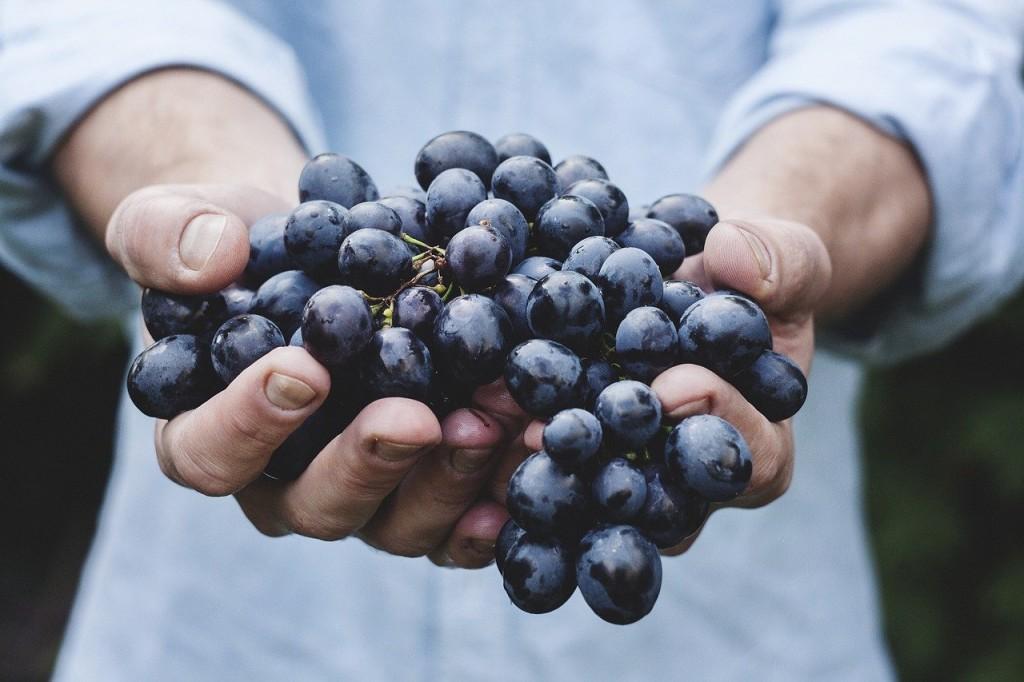 uvas alimentos comida