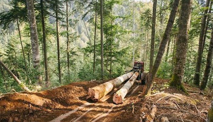 greenpeace-deforestacion2
